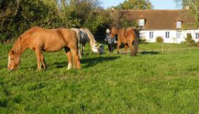 Farm with castle on 20 ha, ideal for horse activities